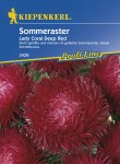 3426_Sommeraster_Lady_Coral_Deep_Red_4000159034266_VS5937825313426
