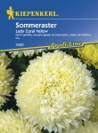 3428_Sommeraster_Lady_Coral_Yellow_4000159034280_VS59378258d6412